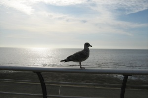 My thoughtful seagull seems to be an appropriate picture to share today