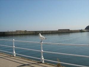 Blog seagull