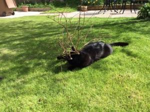 Billy 'helping' in the garden