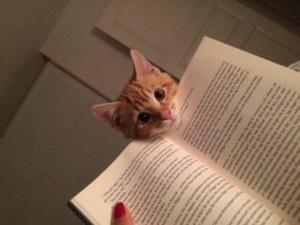 Wotya reading?