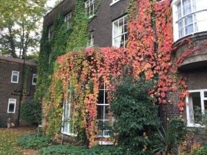 Beautiful autumn colours...