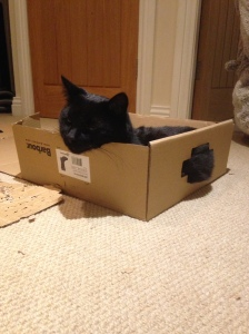 Billy getting snug in his new box.....