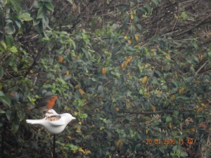 Something as simple as a robin in the garden brings contentment....