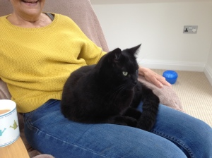 Or find a nice cosy lap to sit on......