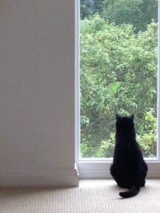 Or just sit and eye up the next bird who wants to play...watch the world go by